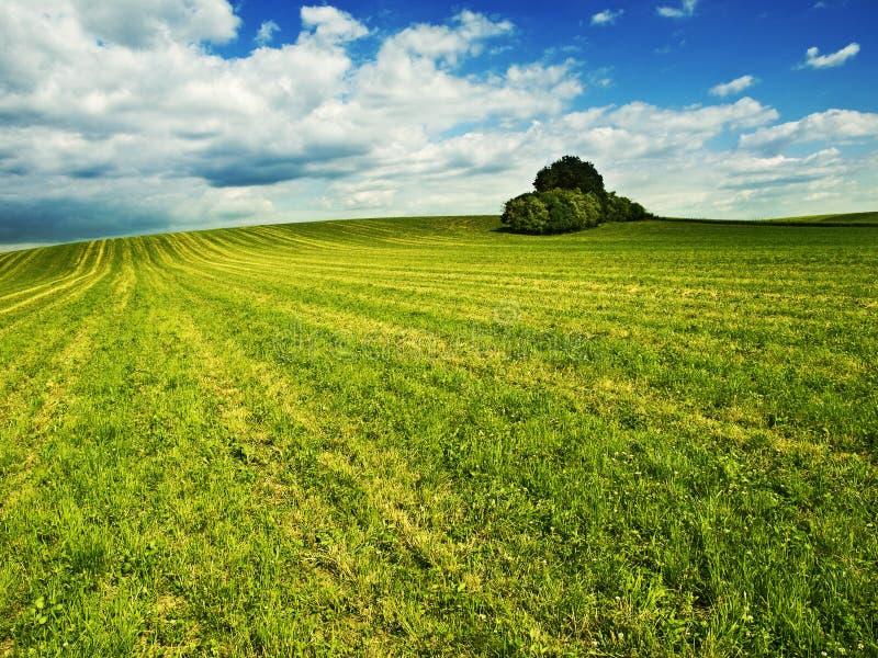 Bello paesaggio di estate fotografia stock libera da diritti