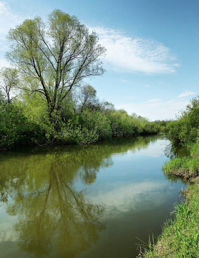Bello paesaggio di estate con il piccoli fiume e cielo blu calmi fotografia stock