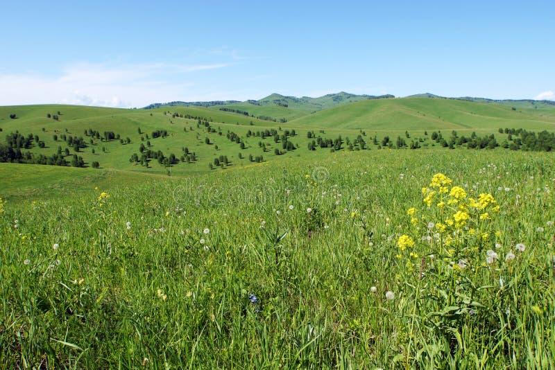 Bello paesaggio di estate con un prato erboso su priorità alta e sulle colline verdi a distanza fotografia stock libera da diritti