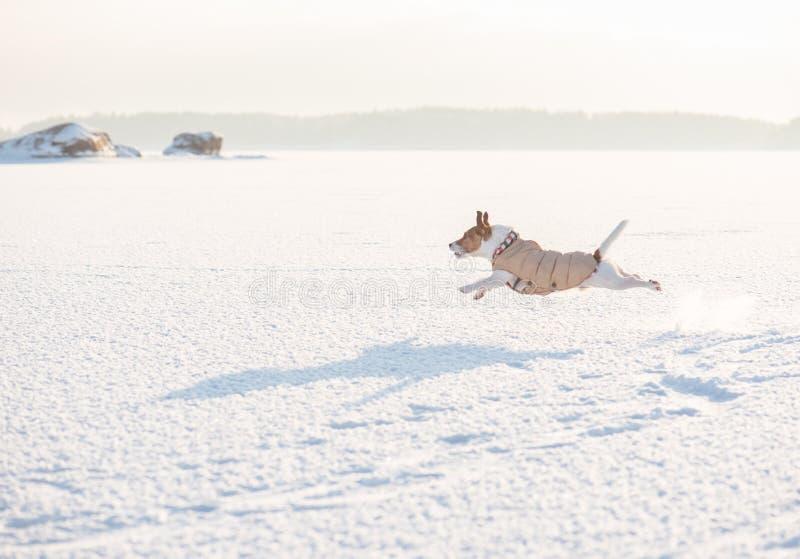 Bello paesaggio di inverno con funzionamento del cane alla priorità alta immagini stock