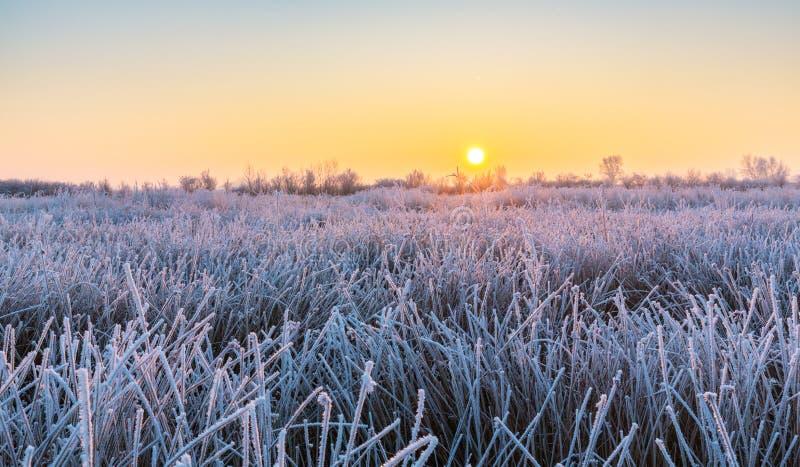 Bello paesaggio di inverno con gli alberi coperti da gelo, lungo il fiume congelato immagine stock libera da diritti