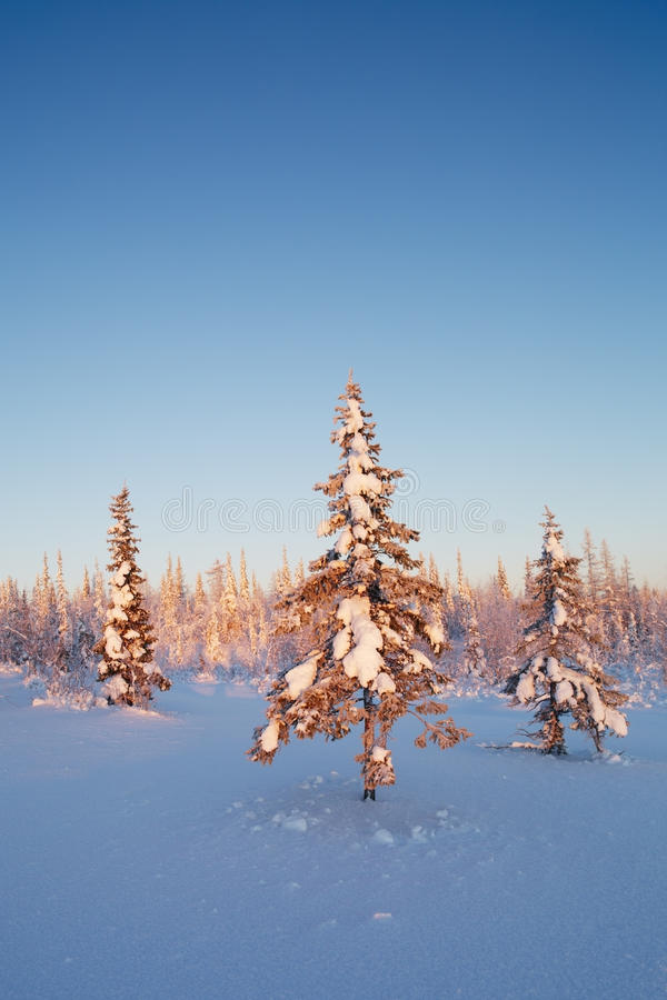 Bello paesaggio di inverno con gli alberi della neve fotografia stock libera da diritti