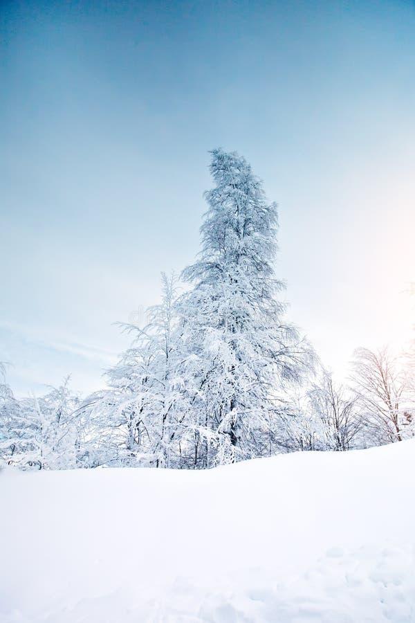 Bello paesaggio di inverno con gli alberi innevati Nuovo anno felice Buon Natale immagine stock libera da diritti