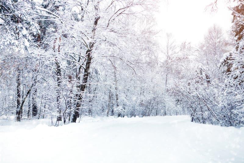 Bello paesaggio di inverno con gli alberi innevati Nuovo anno felice Buon Natale fotografie stock
