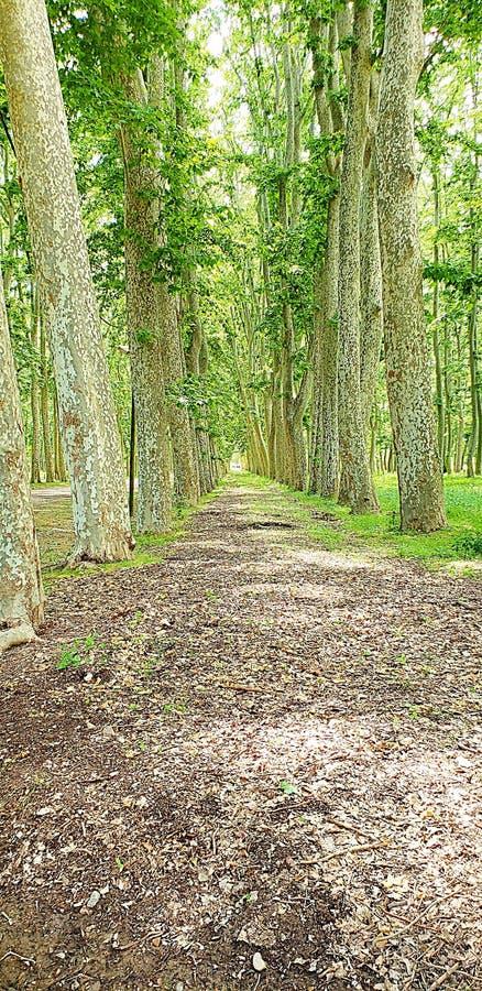 Bello paesaggio di legno immagine stock