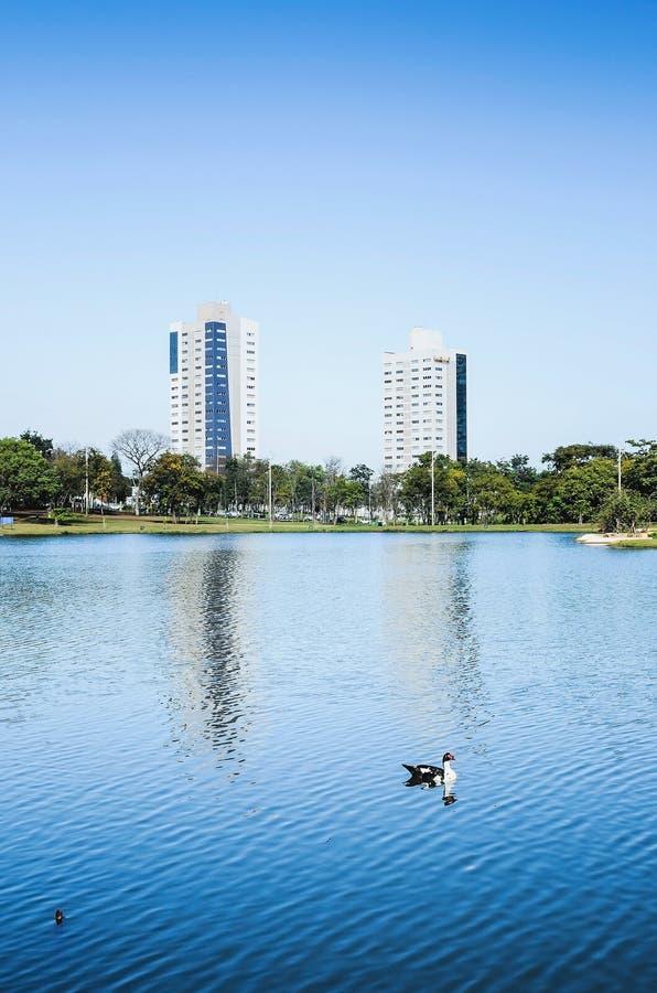 Bello paesaggio di nuoto dell'anatra sull'acqua di un lago sulla a fotografia stock libera da diritti