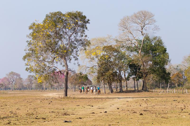 Bello paesaggio di Pantanal dal Brasile Natura brasiliana immagini stock libere da diritti