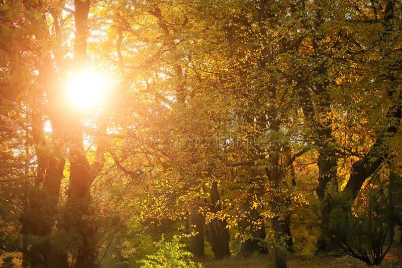 Bello paesaggio dorato di autunno fotografie stock libere da diritti