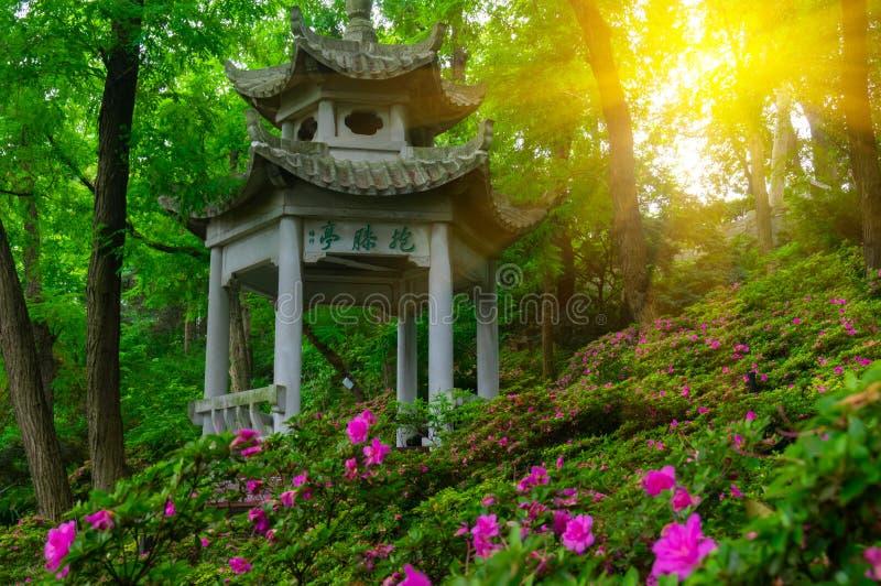 Bello paesaggio nel Forest Park in primavera e l'estate fotografie stock