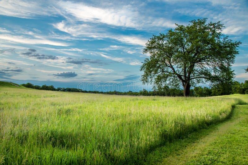 Bello paesaggio nel parco fotografie stock libere da diritti