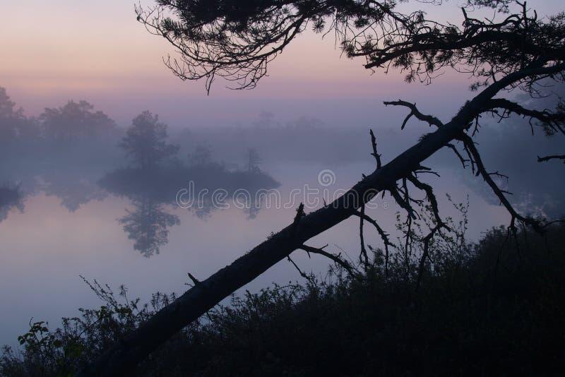 Bello paesaggio in palude di Marimetsa fotografia stock libera da diritti
