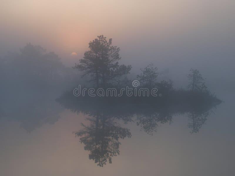 Bello paesaggio in palude di Marimetsa immagine stock