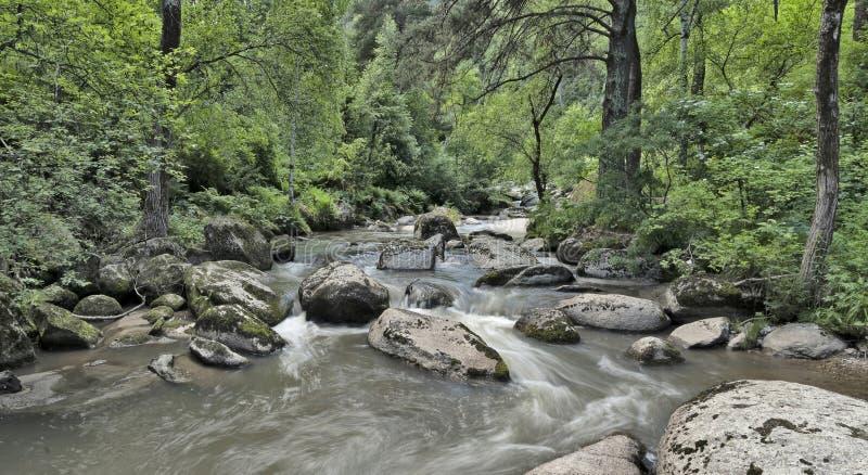 Bello paesaggio panoramico con un fiume scorrente veloce della montagna che scorre fra le rocce immagine stock
