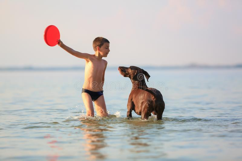 Bello paesaggio soleggiato di estate Il giorno il bambino piccolo sta giocando, funzionamento che salta con il cane marrone cerca immagini stock
