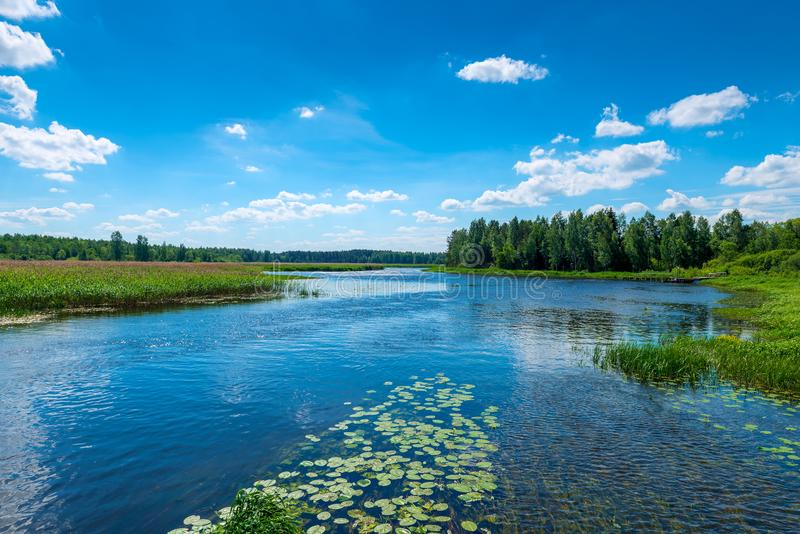 Bello paesaggio - un fiume con chiara acqua, una foresta verde a fotografie stock libere da diritti