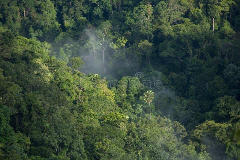 Bello paesaggio verde immagini stock libere da diritti