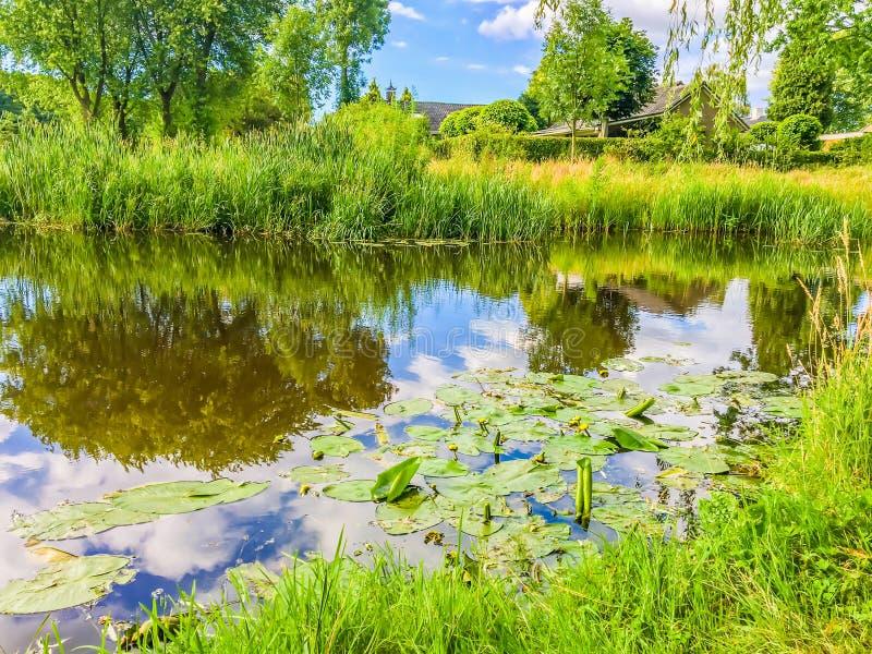 Bello paesaggio verde della foresta della natura con un grande stagno del fiume con dell'acqua il ` s lilly in  fotografia stock