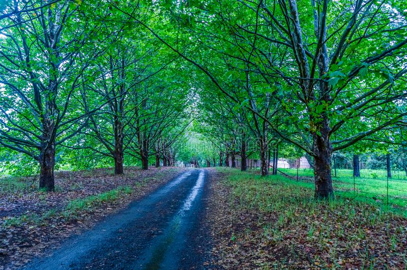 Bello paesaggio verde in Natal Midlands nel Sudafrica anche immagini stock