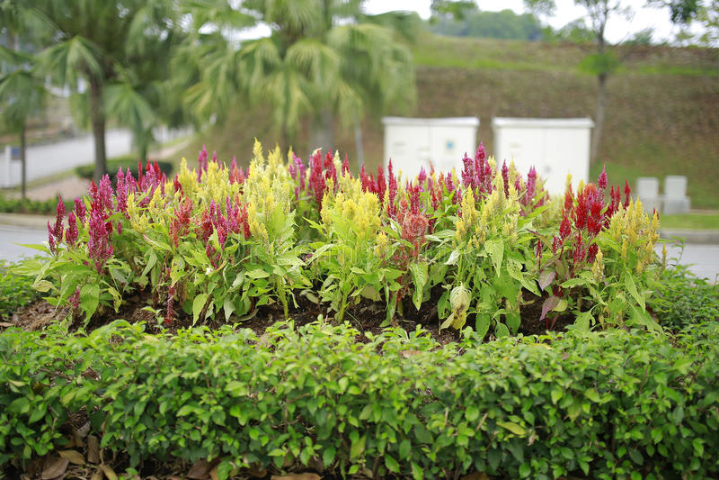 Bello paesaggio verde a Putrajaya Malesia fotografia stock libera da diritti