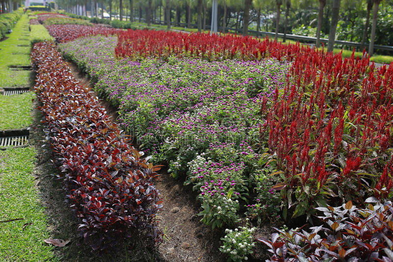 Bello paesaggio verde a Putrajaya Malesia fotografia stock