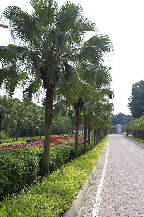 Bello paesaggio verde a Putrajaya Malesia immagine stock