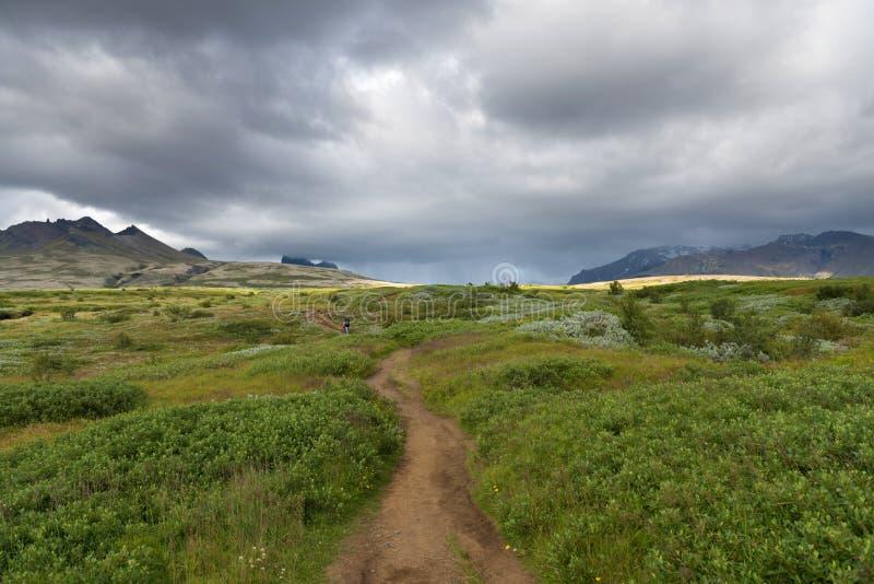 Bello panorama del paesaggio muscoso vulcanico stupefacente di Eldhraun ad alba immagini stock libere da diritti