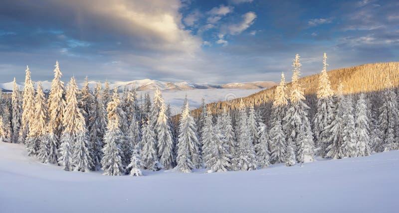 Bello panorama di inverno in montagne carpatiche con la baia della neve immagine stock