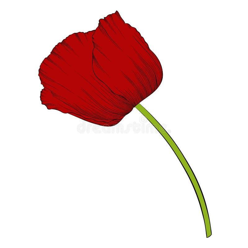 Bello papavero rosso in uno stile grafico disegnato a mano nei colori d'annata isolato su fondo illustrazione vettoriale