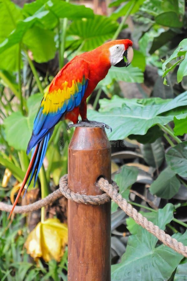Bello pappagallo immagine stock libera da diritti