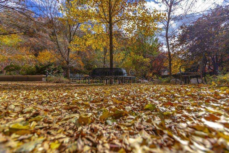 Bello parco con i sedili ed il terreno di rilassamento coperti di foglie cadute fotografie stock libere da diritti