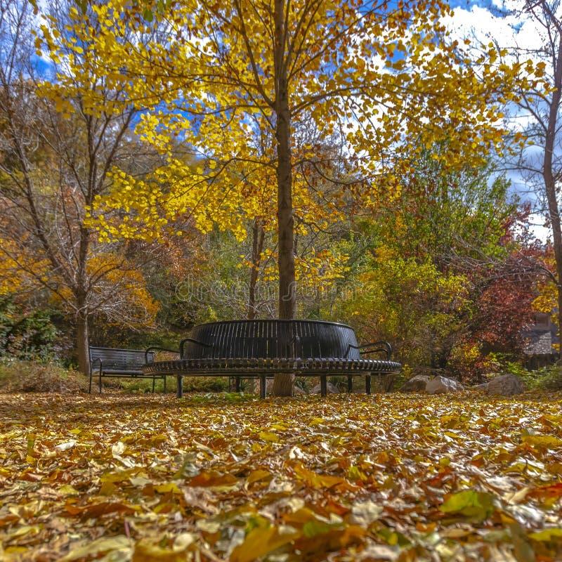 Bello parco del quadrato con i sedili ed il terreno di rilassamento coperti di foglie cadute immagine stock libera da diritti