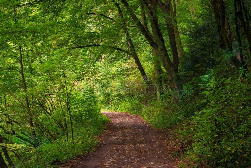 bello parco ombreggiato un giorno di estate immagini stock libere da diritti