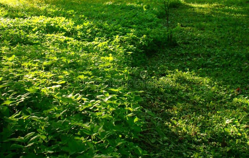 Bello parco soleggiato fresco del prato inglese in primavera fotografie stock