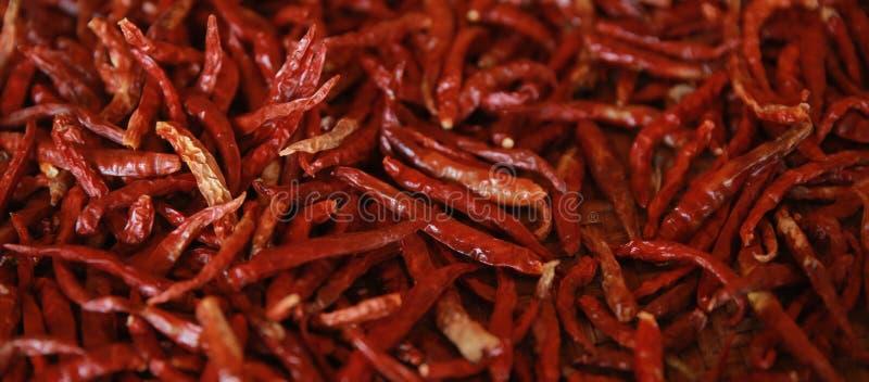 Bello peperoncino rosso asciutto della Tailandia rovente e piccante fatto per il preparato e l'erba dell'alimento fotografia stock