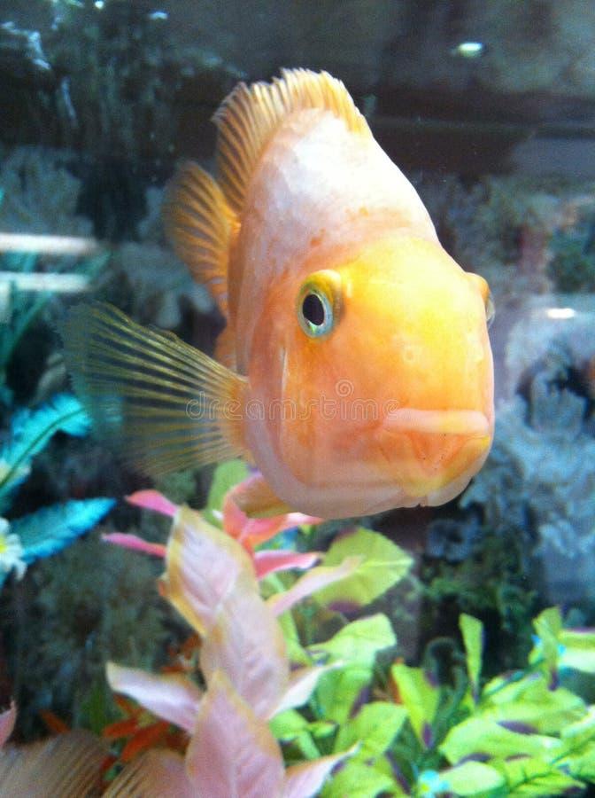 Bello pesce immagini stock libere da diritti