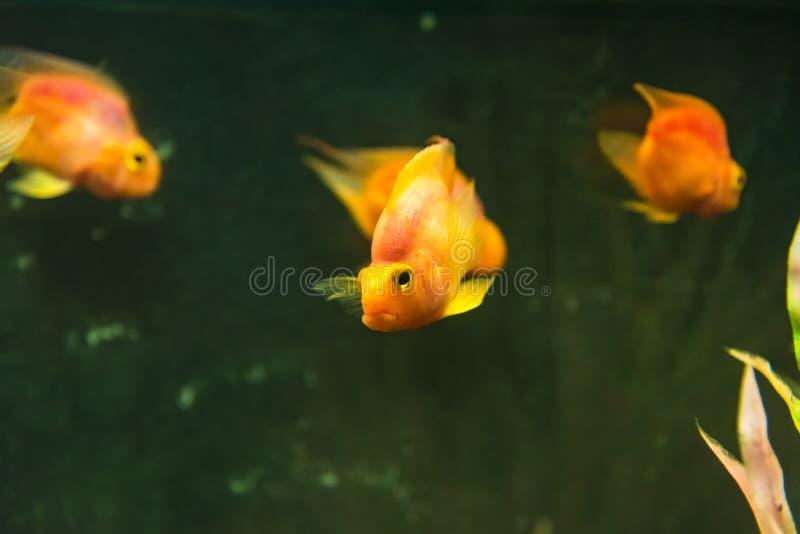 Bello pesce di mare nell'acquario all'acquario di Phuket thailand fotografie stock libere da diritti