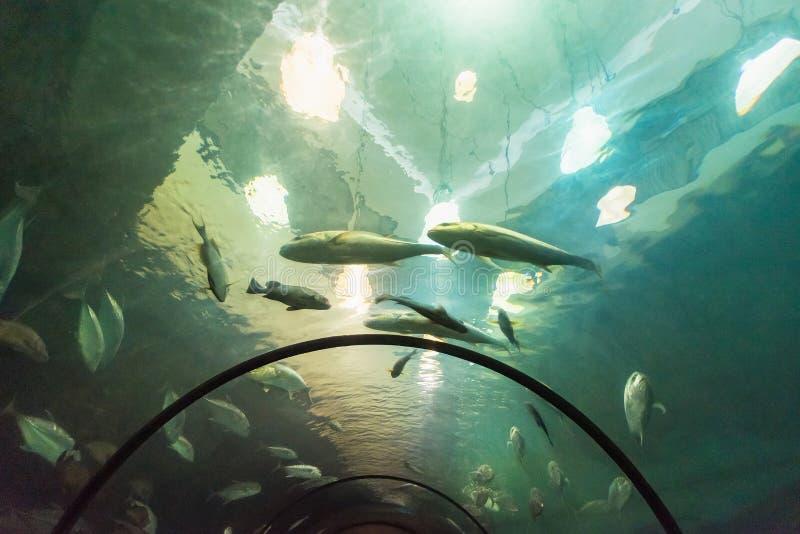 Bello pesce di mare nell'acquario all'acquario di Phuket thailand fotografia stock
