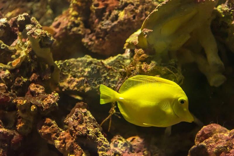 Bello pesce di mare nell'acquario all'acquario di Phuket thailand fotografia stock libera da diritti