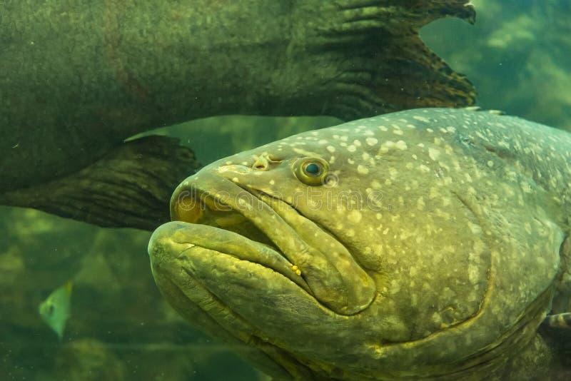 Bello pesce di mare nell'acquario all'acquario di Phuket thailand immagini stock libere da diritti