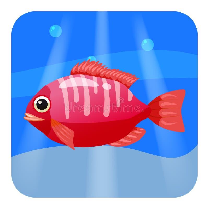 Bello pesce tropicale rosso sveglio, sul fondo del mare, oceano, vettore, isolato, stile del fumetto illustrazione di stock