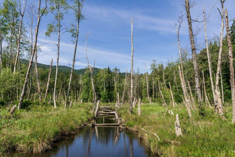 Bello piccolo fiume o insenatura vicino con i bei alberi e piante con un cielo blu piacevole fotografie stock