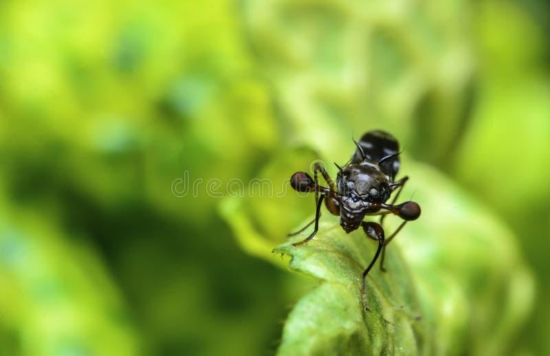 Bello piccolo insetto sulla pianta in Malesia immagini stock libere da diritti