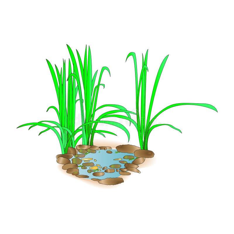 Bello piccolo lago con erba Per progettazione e stampa del paesaggio Paesaggio verde nel lago Priorità bassa della natura Illust  illustrazione vettoriale