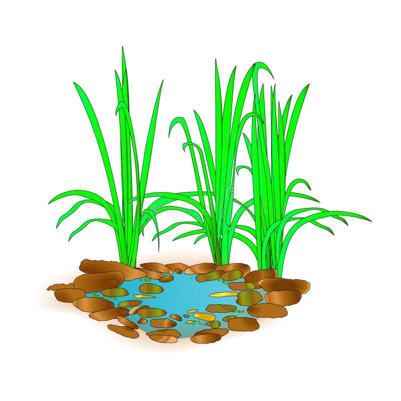 Bello piccolo lago con erba Per progettazione e stampa del paesaggio Paesaggio verde nel lago Priorità bassa della natura Illust  royalty illustrazione gratis