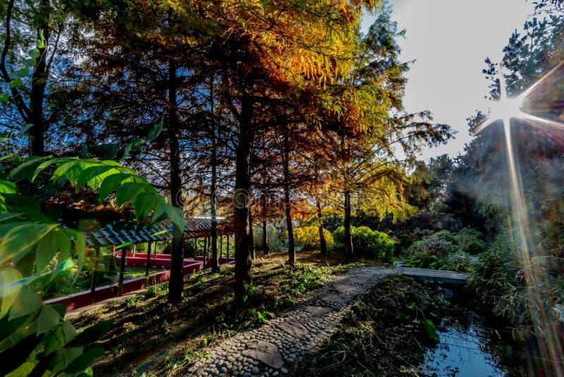 Bello pomeriggio di autunno con gli alberi con giallo e le foglie verdi con un lago con la riflessione del sole immagini stock