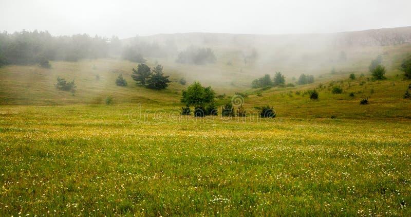 Bello prato con i fiori nelle montagne La nebbia nella b fotografie stock