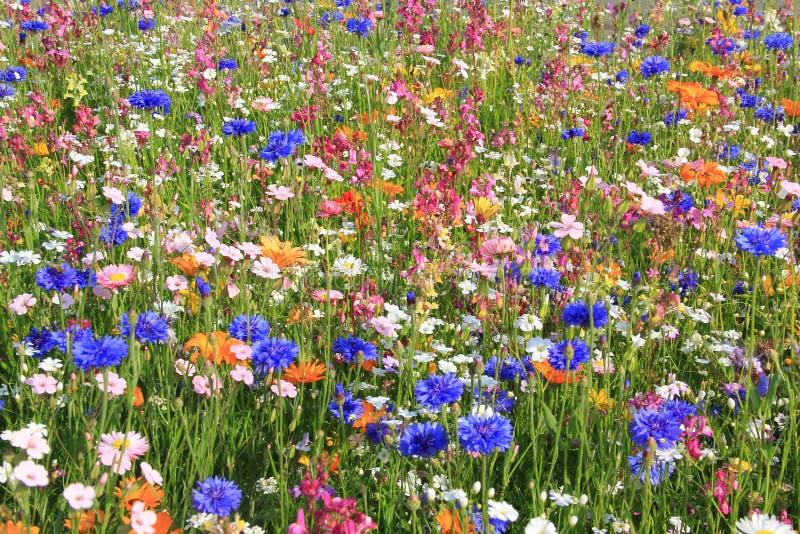 Bello prato del wildflower con differenti fiori immagine stock libera da diritti