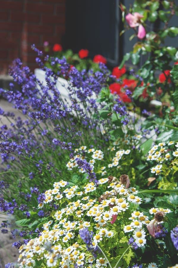 Bello prato inglese con differenti colori e prato inglese un giorno soleggiato landscaping La composizione di piccoli fiori fotografie stock