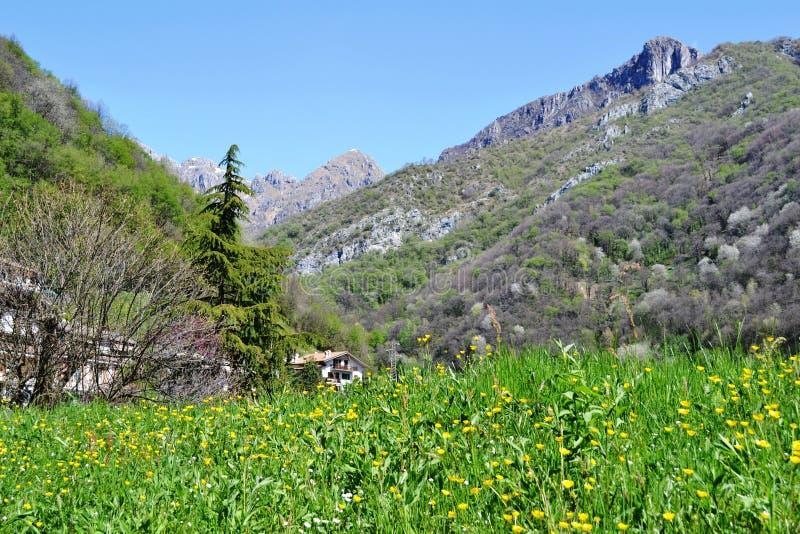 Bello prato verde di fioritura della molla e vista panoramica al paesino di montagna fotografia stock