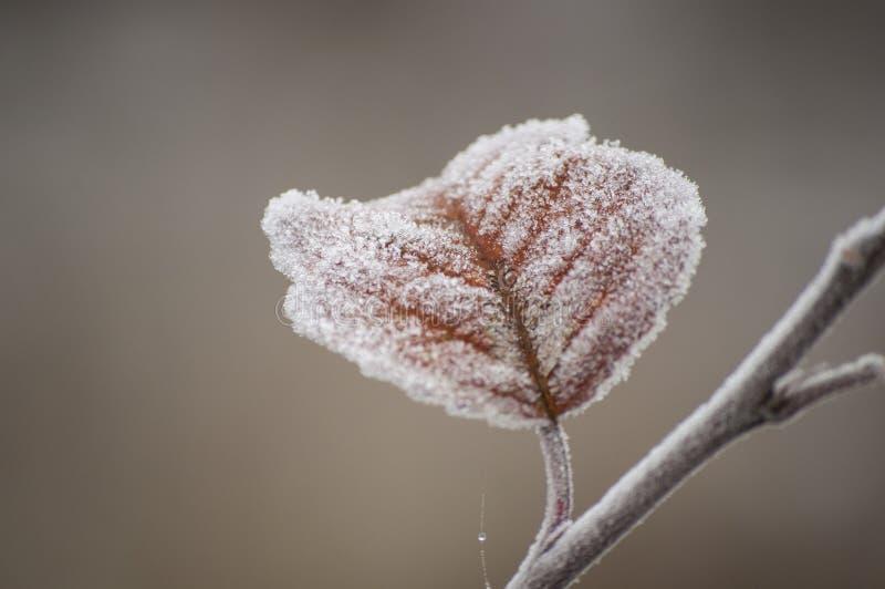 Bello primo piano dei cristalli di ghiaccio sulla foglia di autunno fotografia stock libera da diritti